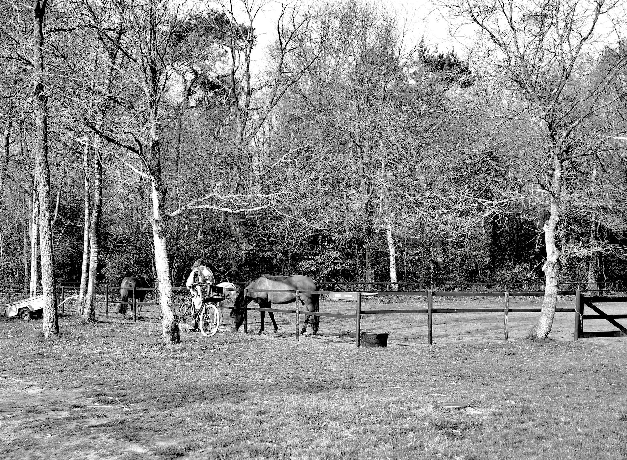 paardjekijken - 1
