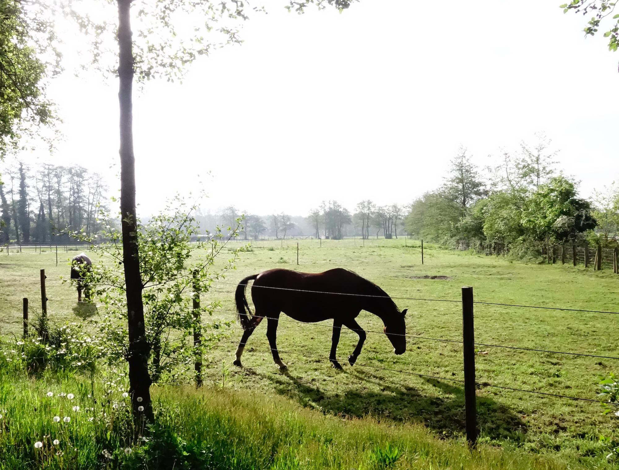 paard-ochtendzon - 1