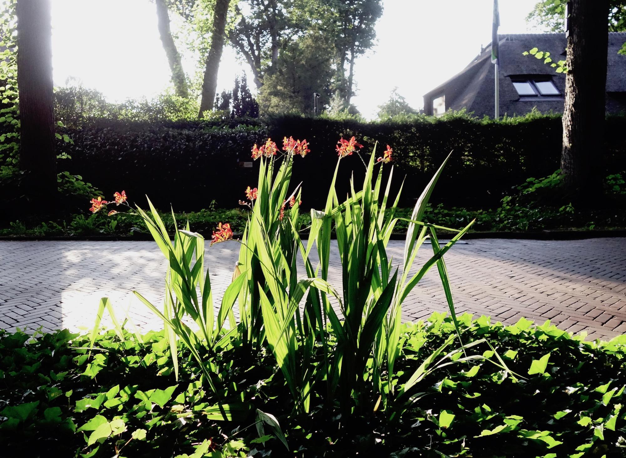 rodebloemen-torenln-2 - 1