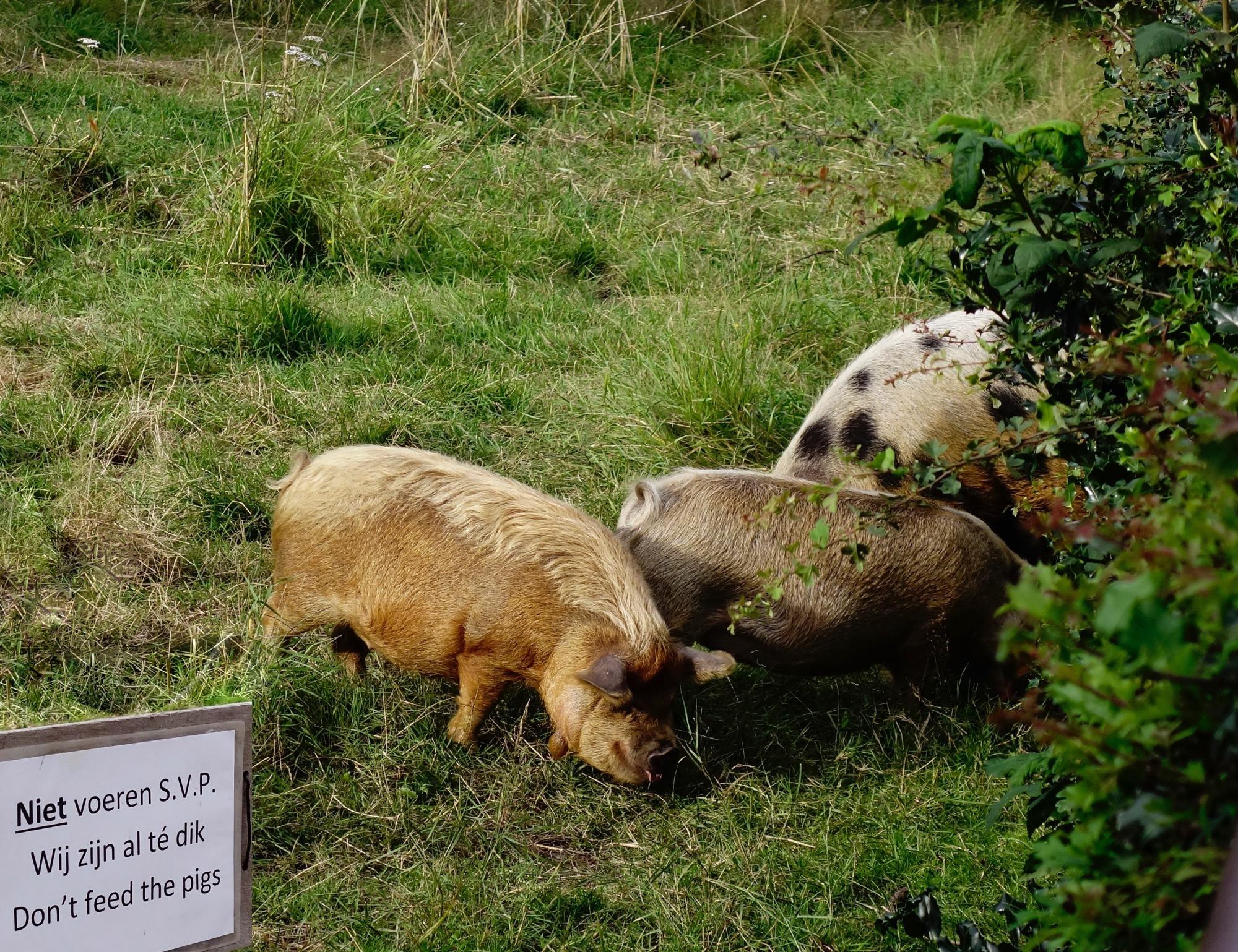 pigs2def - 1