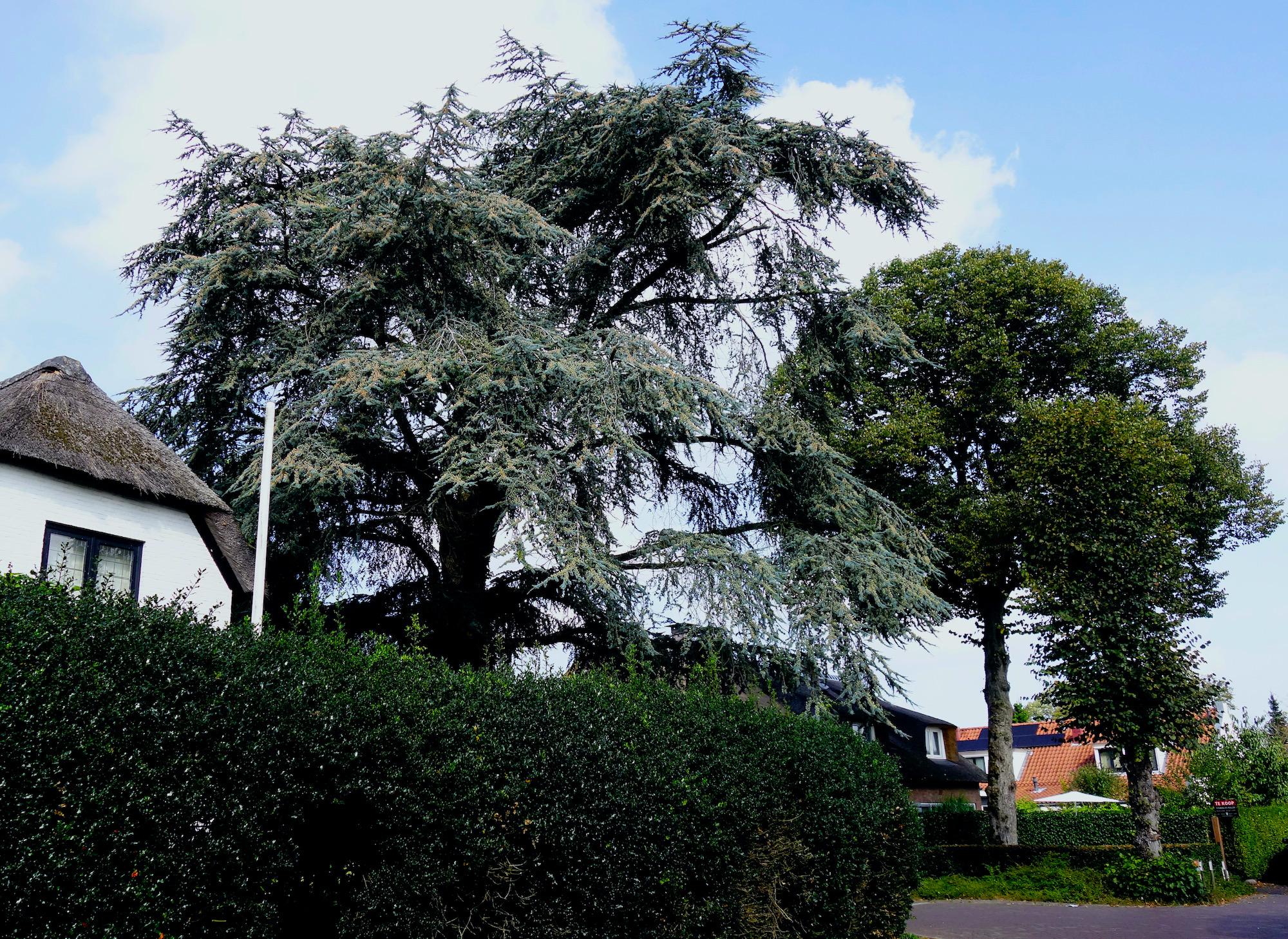 bomen - 1