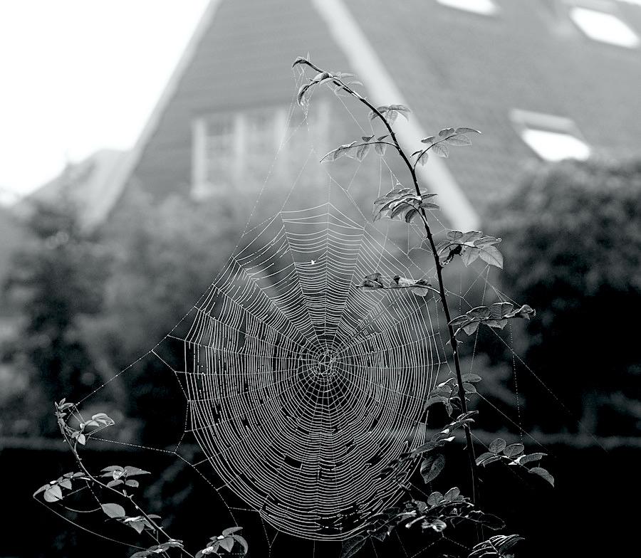 web - 1