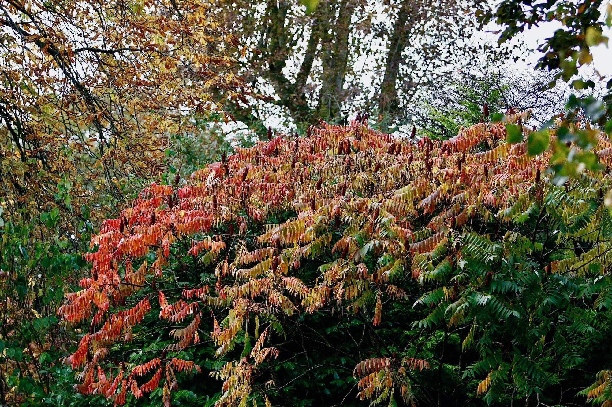 herfstkleuren-torenln-pastorie - 1