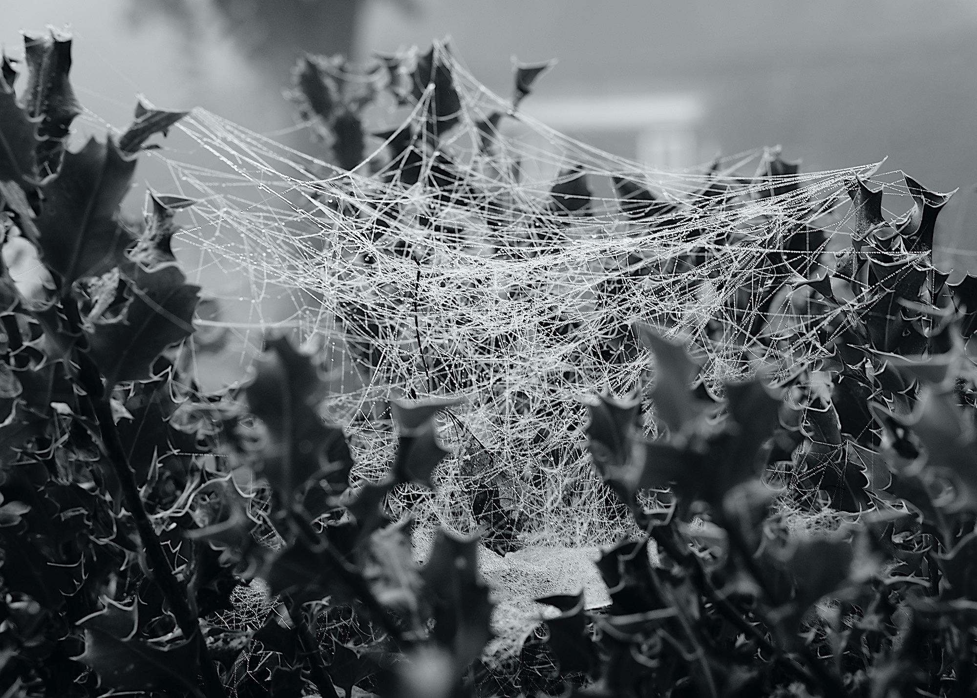 webverdieping - 1
